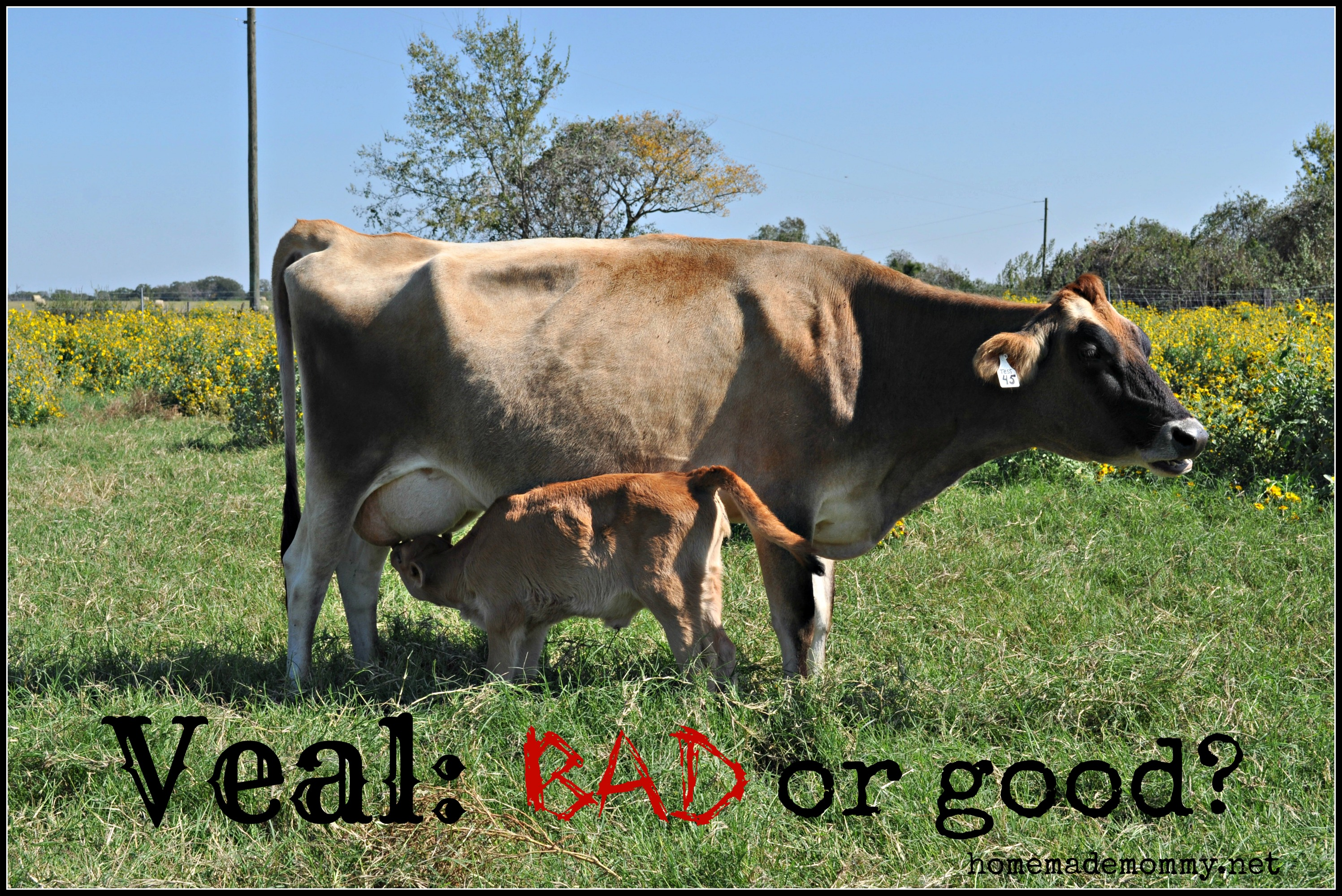 Veal Bad Or Good? via Homemade Mommy